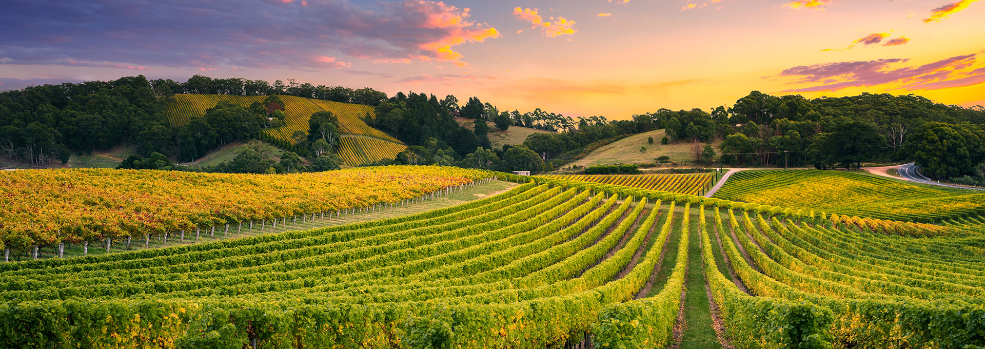 RIVALITA Wines: The Sustainability Certification Journey of a Green Business