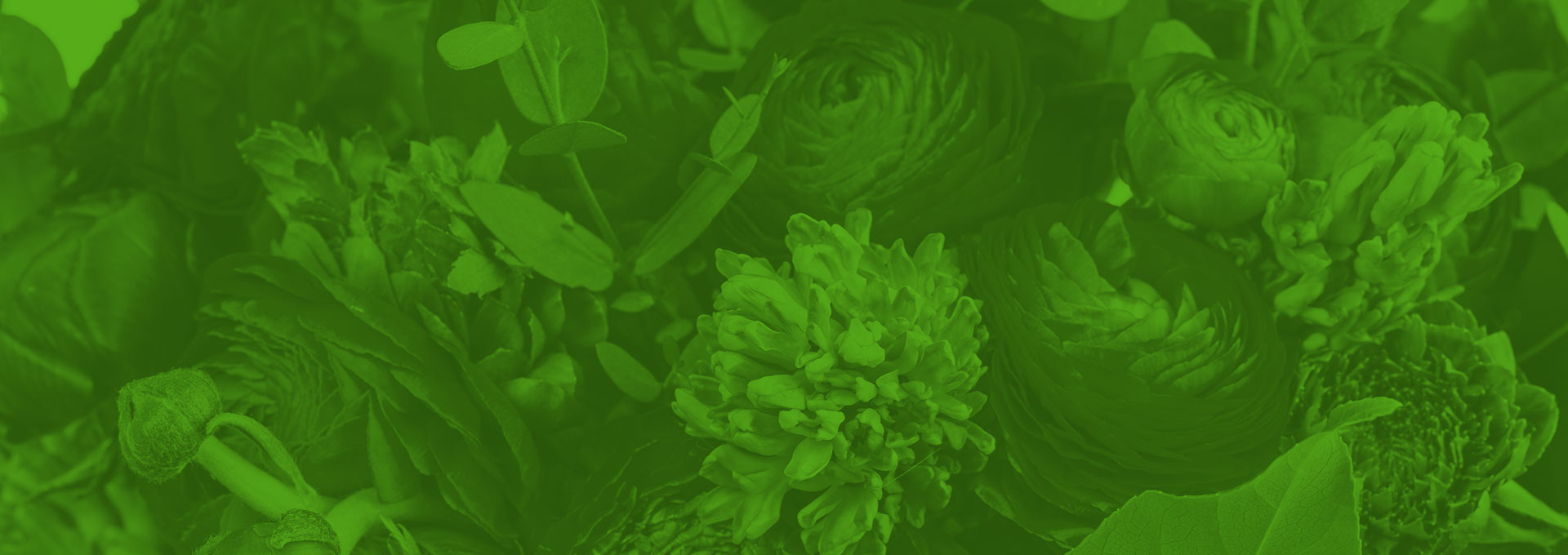 Sustainability Guide For Florists: Getting Started