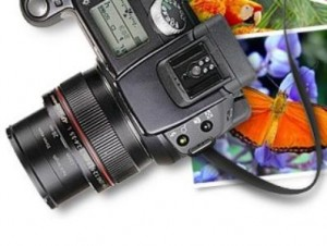 A digital camera image in GBB Blog