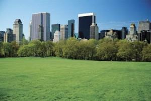Green New York in GBB Blog