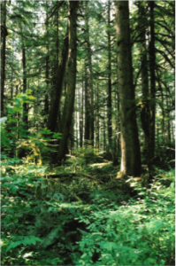 Image of Green Forests Green Funds in GBB BLOG
