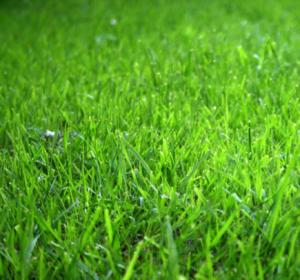 Green Grass in GBB BLOG