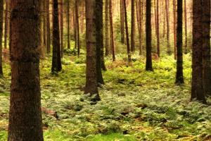 Saving Trees in GBB BLOG