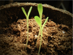 Genetically Engineered Seeds Pros and Cons in GBB BLOG