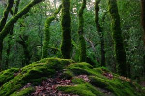 Saving our Forests in GBB BLOG