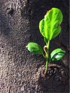 Communicating Sustainability to Your Customers in GBB BLOG