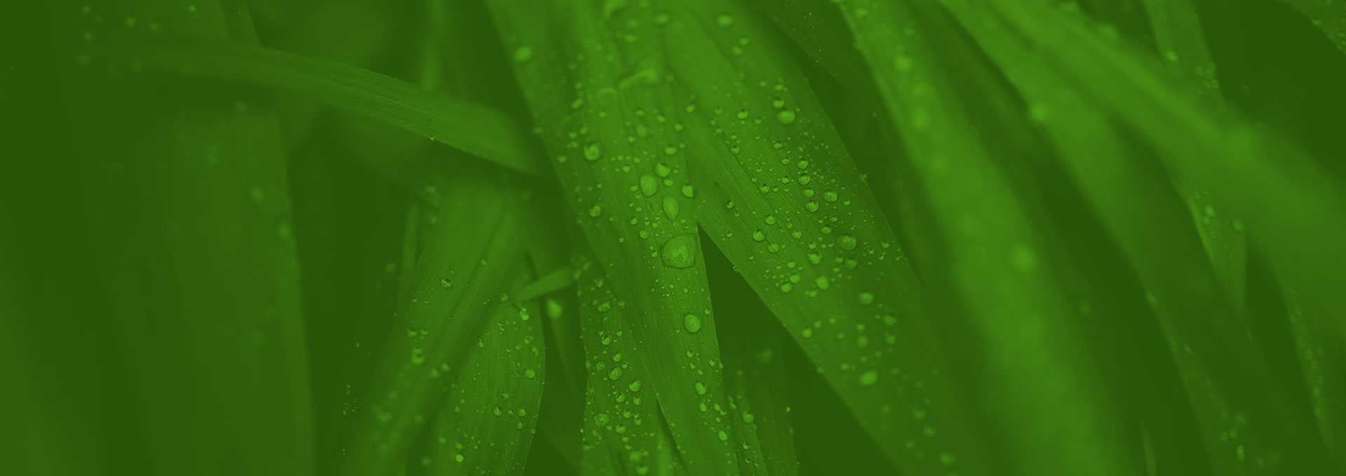 Green Me Locally: Helping Businesses Lower Their Environmental Impact and Become More Profitable