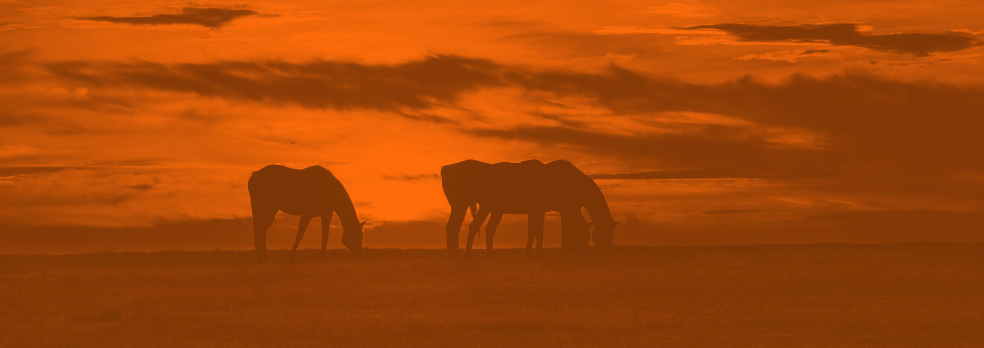 Custom Equine Nutrition: Caring For Horses While Caring For the Planet